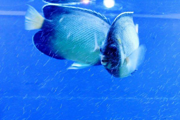 fish-390742_1920